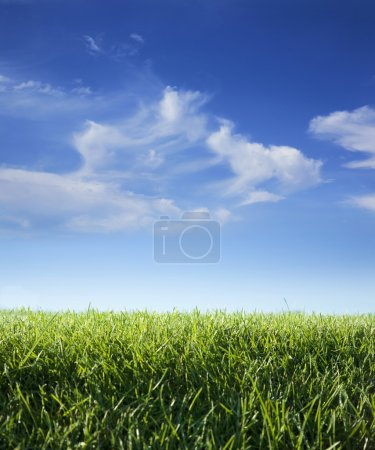 Low angle view of grass and sky with clouds