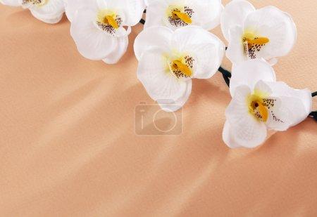 fleurs blanches sur fond beige