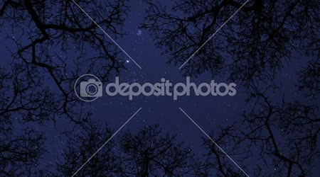 Noční obloha hvězdy mezi stromy časová prodleva 10856