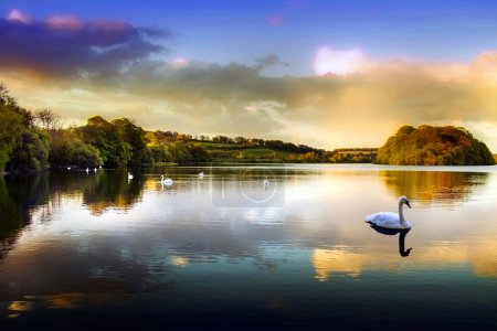 Photo for Picture of a Swan on a Lake in the Scottish Highlands - Royalty Free Image