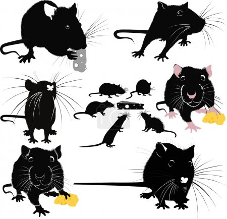 rats mice cheese animals