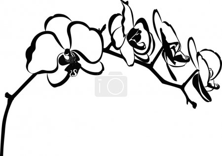Illustration for Orchids flowers isolated on white - Royalty Free Image