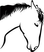 Drawing horse on white background