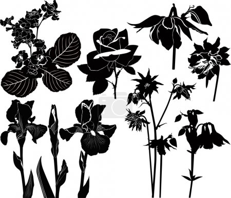 Vector collection of flowers