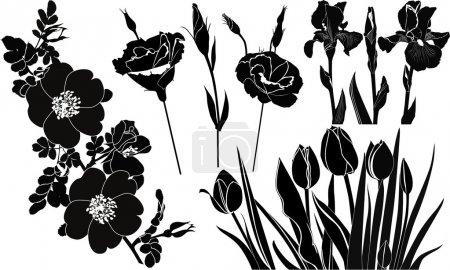 Illustration for Flowers tulips irises roses - Royalty Free Image