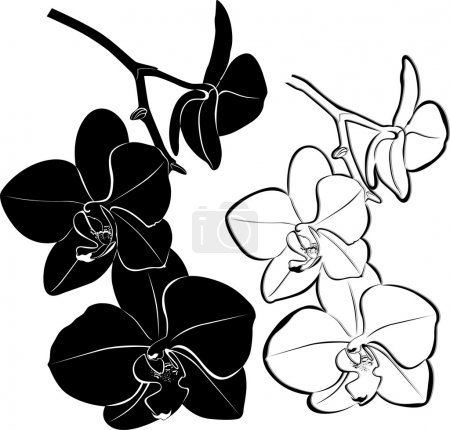 Illustration for Black and white orchid flower - Royalty Free Image