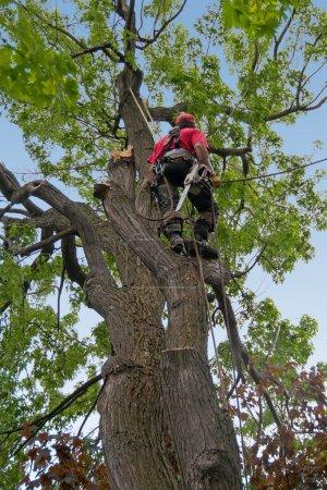 Photo pour Branches d'arbres morts à couper par le chirurgien de l'arbre. - image libre de droit
