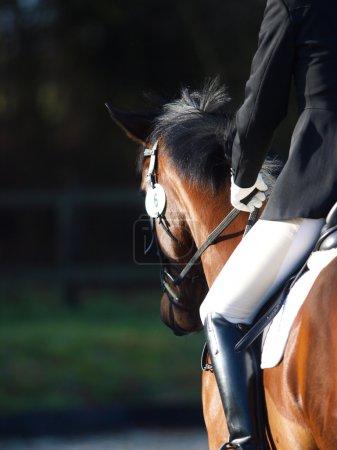 Photo pour Un tir abstrait d'un cheval lors d'une compétition. - image libre de droit