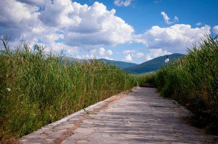 Nature in Greece - Prespa lake...