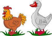 Chicken and Duck living on a farm