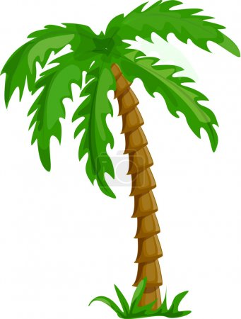 Illustration for Vector tropical palm tree isolated on white background illustration - Royalty Free Image