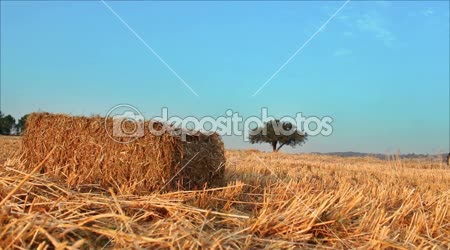 Bale and agricultural baler machine
