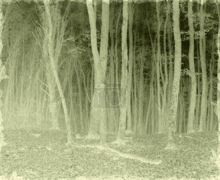 Photo pour Paysage vintage - image libre de droit