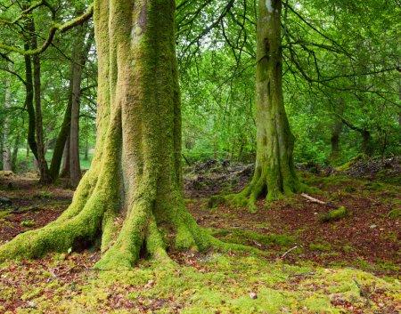 Wald in Schottland