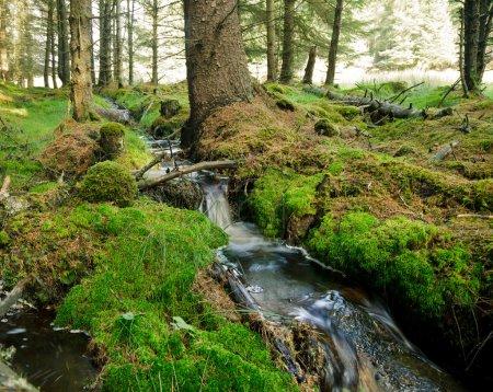 Photo pour Petit ruisseau forestier en Écosse - image libre de droit