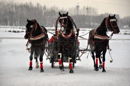 Russian team of horses