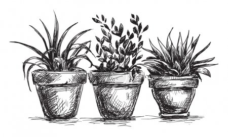 Illustration for Flower pots - Royalty Free Image