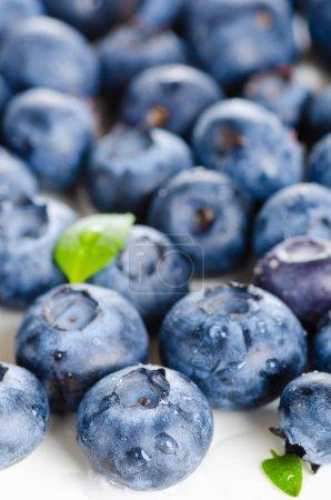 bilberries on white background