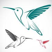 Vector image of an hummingbird