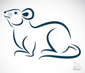 Vector image of an rat on white background