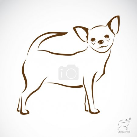 Vector image of an chihuahua dog