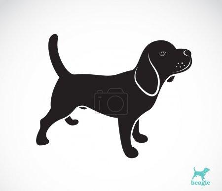 Vector image of beagle dog