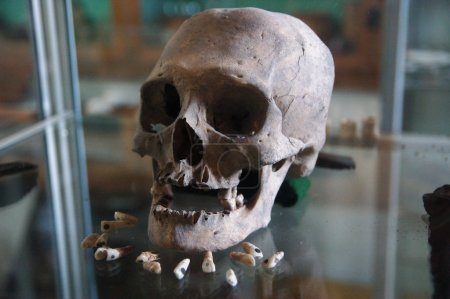 Old Mayan Skull and Teeths