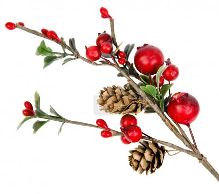 Photo for Christmas branch isolated on white background - Royalty Free Image