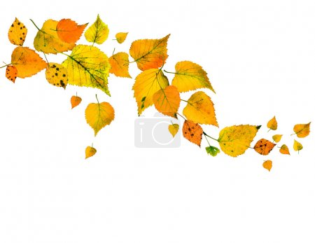 Photo for Autumn leaves falling isolated on white - Royalty Free Image