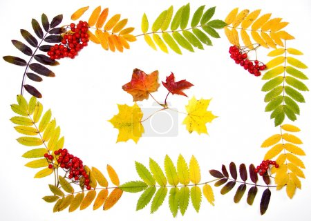 Autumn decoration of leaves and rowan berries to your text
