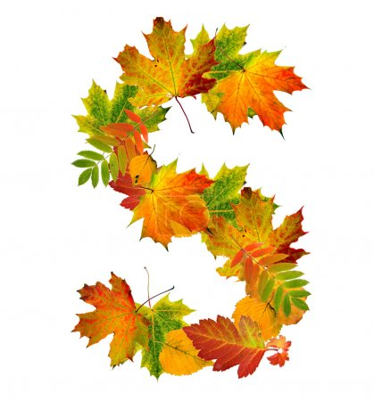 Letter S made of autumn leaves