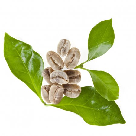 Green unroasted coffee grains and leaves of coffee trees isolated on white