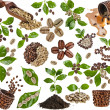 Collection of coffee grains beans with leaves of c...