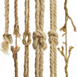 Hemp ropes with knot isolated on white background...