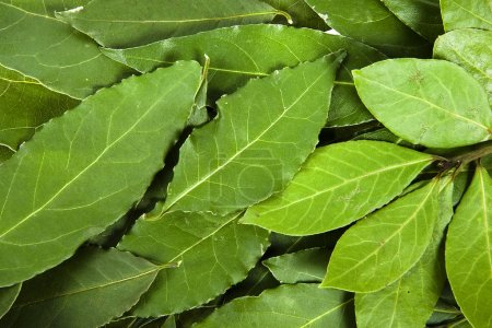 Photo for Bay leaves - Royalty Free Image