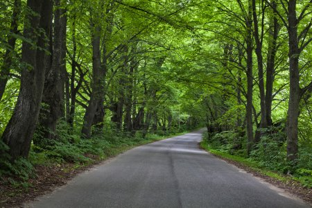 Road in beautiful green forest