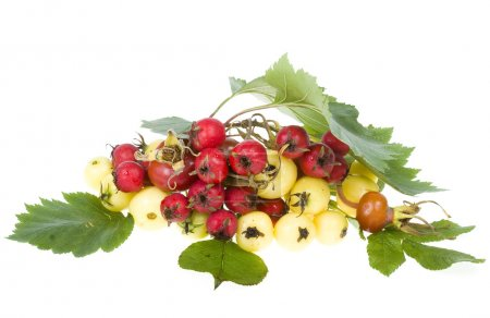 Mischung Hagebutten, Weißdorn, Apfellab