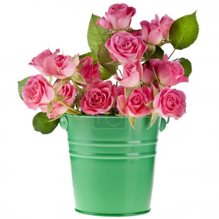 Bouquet pink roses in a green bucket isolated on white