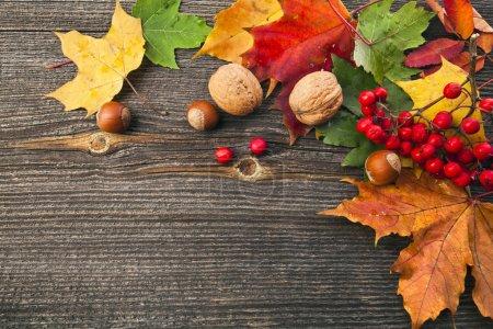 Photo pour Feuilles d'automne et de l'écrou sur fond de texture en bois avec espace copie - image libre de droit