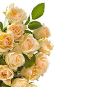 Border of Wedding bouquet cream beige roses isolated on white background,