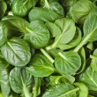 Fresh green leaves spinach or pak choi...