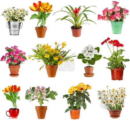 Photo pour Collection ensemble de fleurs bouquet coloré en pot de fleurs et seau, isolé sur fond blanc - image libre de droit