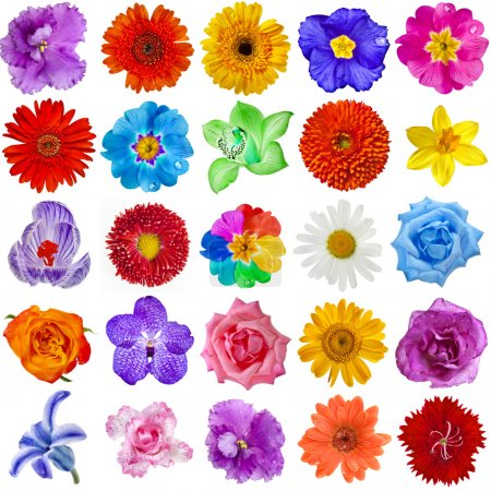 Colored Flower heads collection set isolated on white background