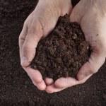 Hand holding soil...