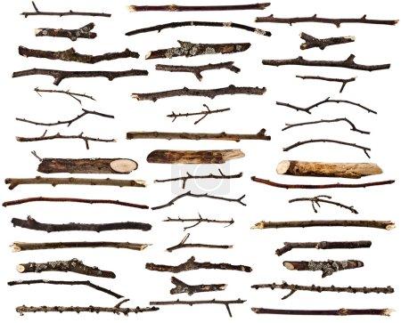 Foto de Set de colección de ramas de madera secas aislado sobre un fondo blanco - Imagen libre de derechos