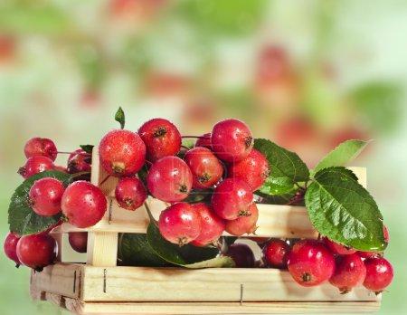 Apfelfruchthaufen in Holzkiste