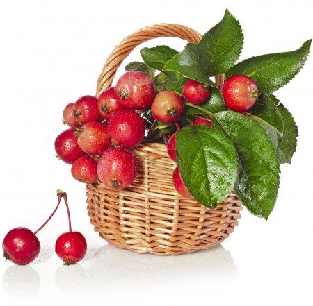 Apfelfrüchte im Weidenkorb