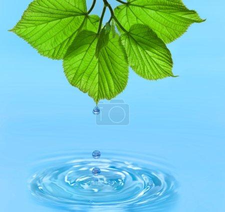 Photo pour Goutte d'eau des feuilles vertes sur fond d'été - image libre de droit