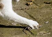 Katz und Maus-Schlacht
