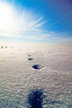 Foto de ???? ? ??????, ????? ? ?????? ?? ?????? ???,???, huellas en la nieve hacia el sol en una colina de nieve, alrededor de los árboles - Imagen libre de derechos